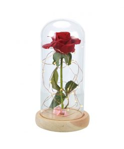 enchanted rose rose in glass dome