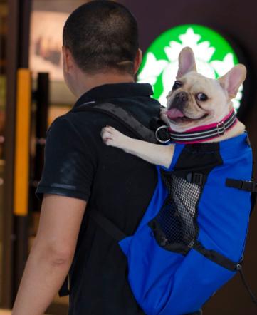 Pet Carrier Backpack - Dog Bag