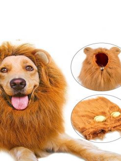 buy Dog Lion Mane