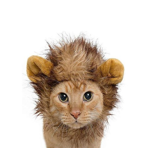 buy Lion Cat Mane