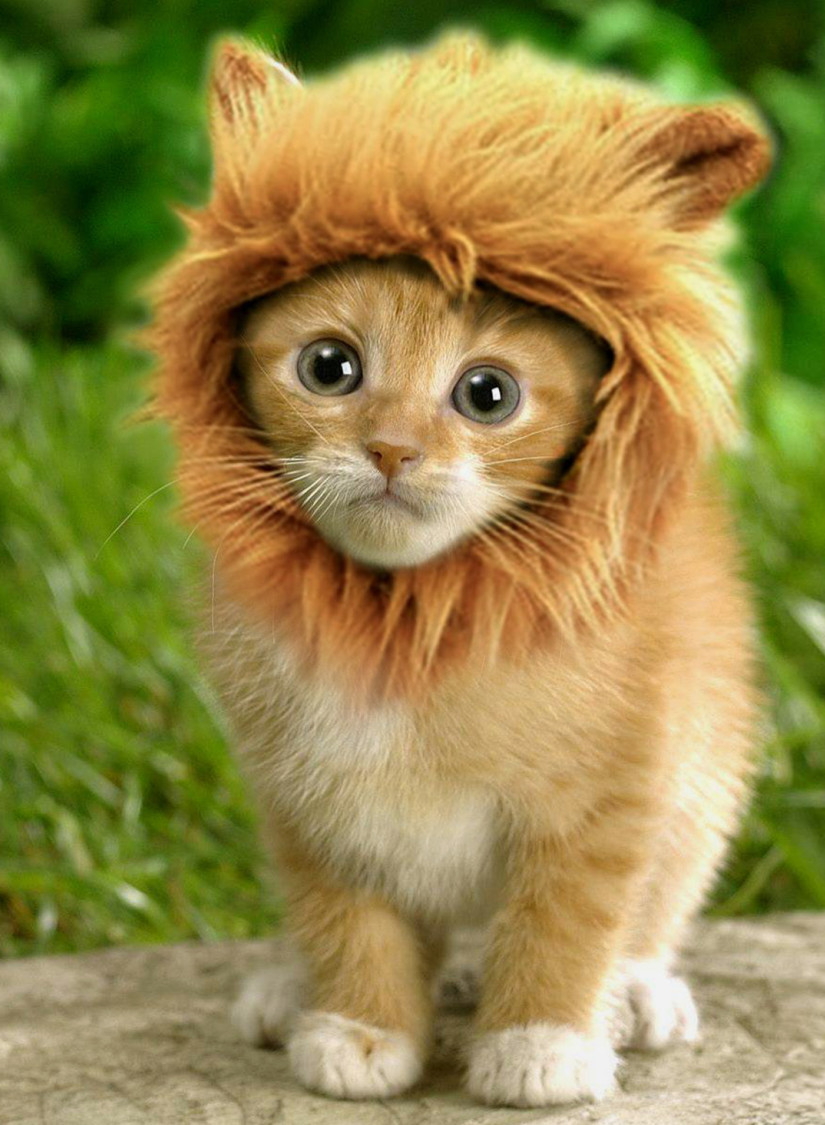 Lion Cat Mane | Lion Hair Cat Mane With Ears | Mexten Product