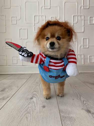 Halloween Deady Doll Chucky Dog Costume photo review