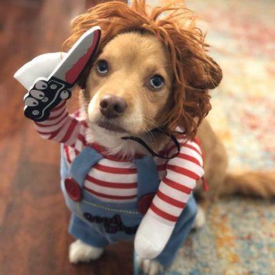 Halloween Deady Doll Chucky Dog Costume